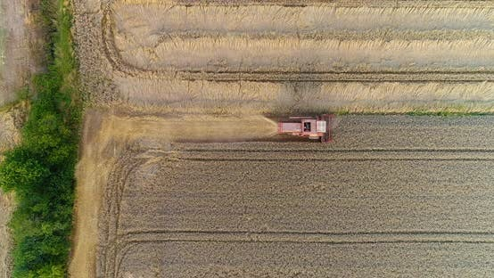 Cover Image for Combine Harvester Harvesting Agricultural Wheat Field