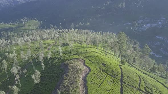 Endless Tropical Highland with Fresh Green Plantations