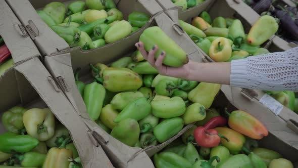 A girl chooses Bulgarian pepper on the market