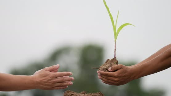 People hand planting young tree