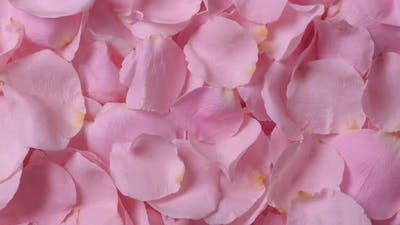 Beautiful Roses Petals Background