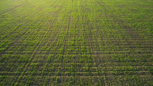 Thumbnail for Top View Of Green Country Field With Row Lines, Agriculture Concept