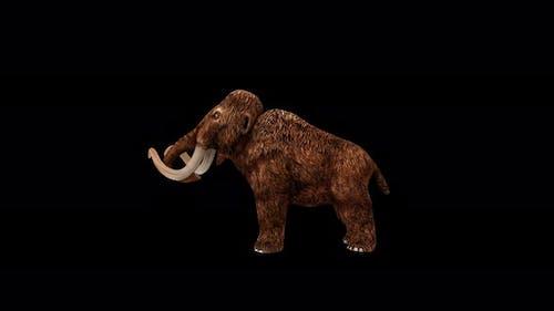 Mammoth Eat