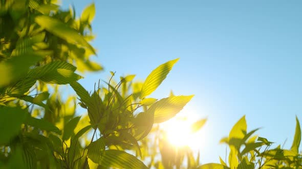 Thumbnail for Green wild herbs waving against the morning sun
