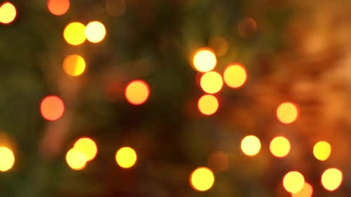 Blurred Background of Meteoric Multicolored Garland on Fir Branches