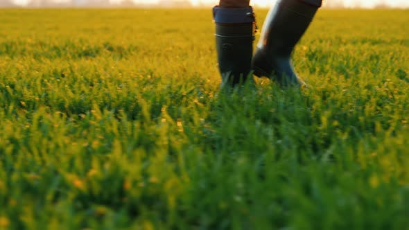 Cover Image for Side View of Farmer in Rubber Boots Walks Across a Green Field, Only Legs Are Visible in the Frame