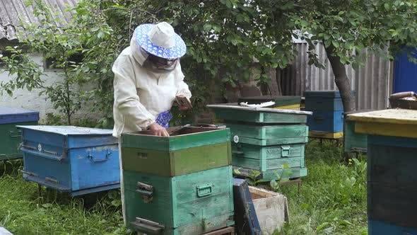 Beekeeper With Bees 5