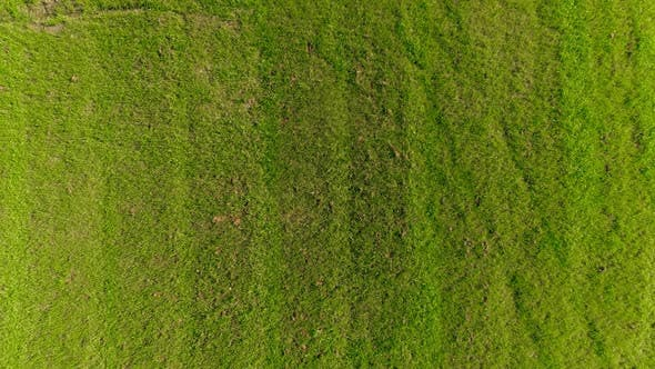 Thumbnail for Aerial View of Green Field