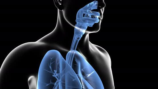 Thumbnail for Human Respiratory System
