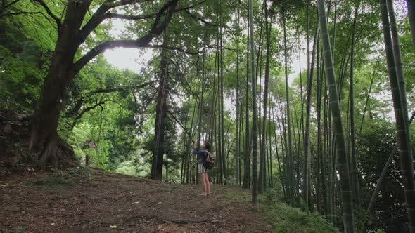Cover Image for Girl Traveler Takes Photo on Smartphone in Tropical Forest with Tall Trees, Ferns, Bamboo Plantation