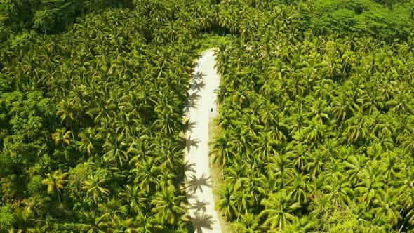 Cover Image for Aerial View of the Road Somewhere Among Coconut Palms in Siargao, Philippines.
