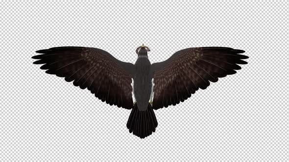 Thumbnail for Snake Eagle with Serpent - 4K Flying Loop - Back View