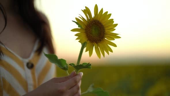 Thumbnail for Beautiful Young Woman in Dress Holds an Sunflower in Her Hands