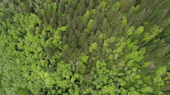 Thumbnail for Birds Eye View Aerial Background High Above Vibrant Bright Green Trees Of Forest Canopy