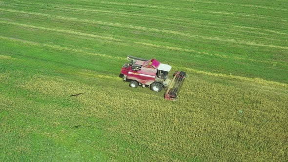 Harvester Working in a Field Around Him Flying Kite Bird of Prey. View From Above