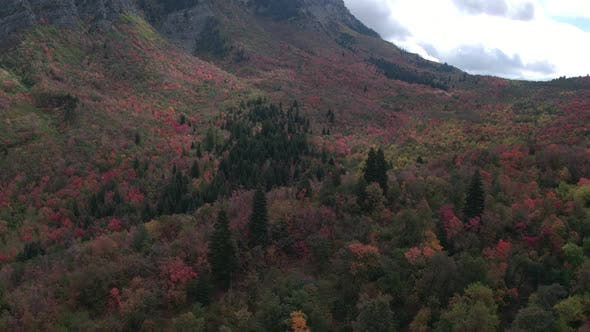 Thumbnail for Aerial view of colorful forest in mountain valley