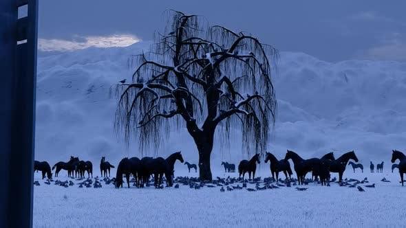 Thumbnail for Horse Farm and Snow Season
