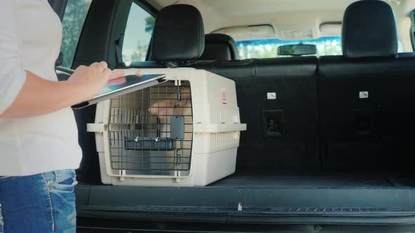 Thumbnail for Shipping Cells with Dogs in a Car Trunk. Delivery and Sale of Live Animals