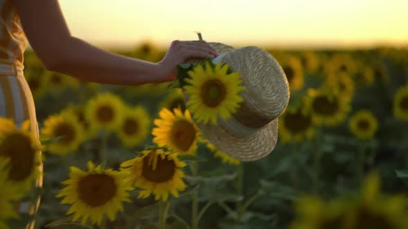 Thumbnail for Close-up Shot of a Woman Walking in a Sunflower Field While Holding a Straw Hat