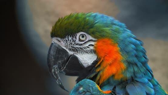 Macro Beautiful Macaw Parrot Bird Eye Close Up, Tropical Nature Color Wildlife