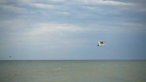 Flight of a Seagull