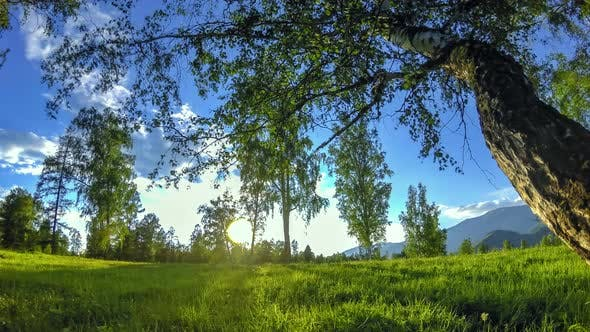 Thumbnail for Mountain Meadow Time-lapse at the Summer or Autumn Time. Wild Nature and Rural Field. Motorised