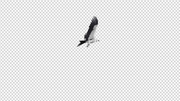 Swallowtail Kite - 4K Flying Round Loop