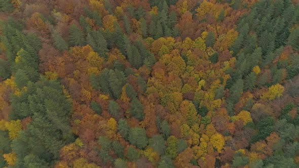 Silent and Vibrant Forest with Autumn Colors