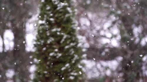 Falling snow in slow motion with blurred pine tree