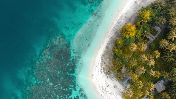 Thumbnail for Aerial: top down tropical beach caribbean sea, turquoise water coral reef coconu