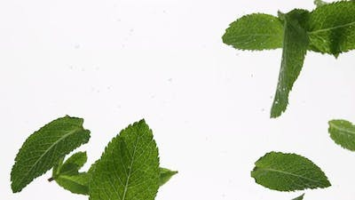 Mint leaves in water over white