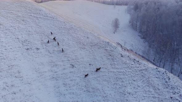 Herd of Wild Deer in the Mountains