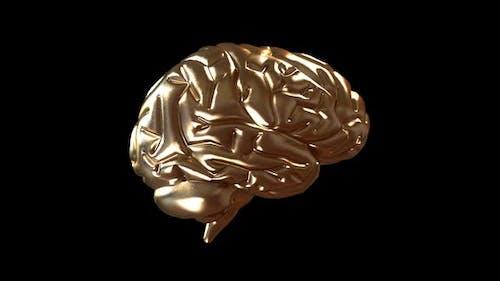 Gloden Brain 360 Loopable