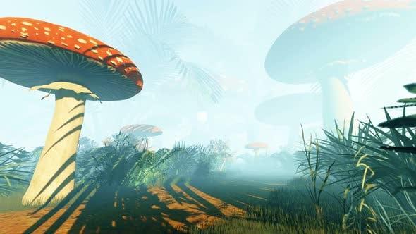Thumbnail for Fantastic Mushrooms