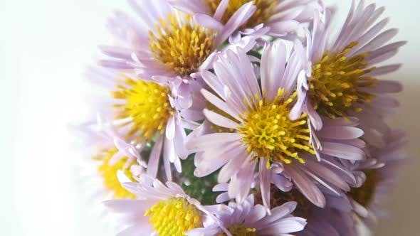 Thumbnail for Rotation Of Wildflowers 4