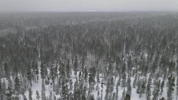 Snowy Forest in Heavy Snowfall Aerial View Top with Winter Panoramic Landscape