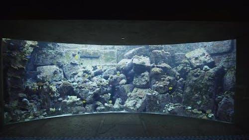 Large Fish Tank with Tropical Fish in the Aquarium