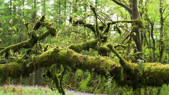 Old Moss Covered Branch
