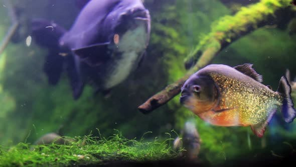 Thumbnail for Fish And Moss In A Fish Tank