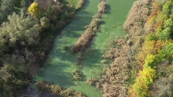 Aerial View Swampy Green Pond