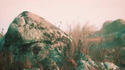 Dry Grass and Rocks Landscape