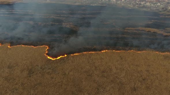 Thumbnail for Aerial Shot of Reed Marshes Covered with a Firestorm in City Suburbs in Ukraine