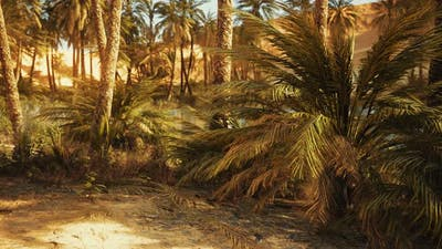 Oasis in Hot Sahara Desert