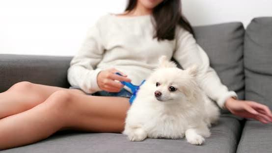Pomeranian hate brushing hair