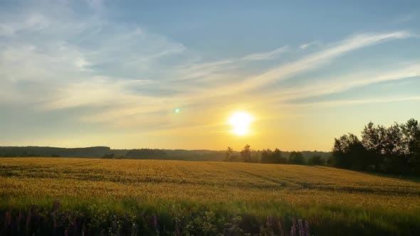 Rural landscape, fields at sunset
