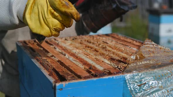 Man Works with Beehive on a Family Eco Business Producing Natural Honey