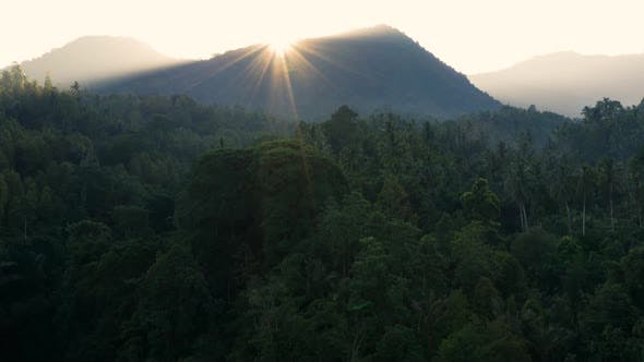 Thumbnail for Moving Over Rainforest Towards a Mountain at Sunrise