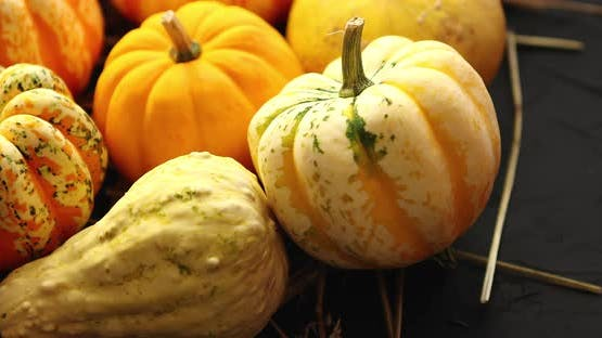 Heap of Pumpkins with Hay