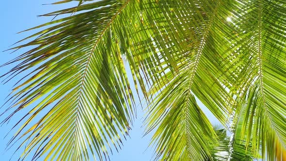 View on Palm Tree Leaves with Sunbeams