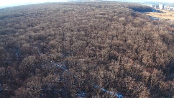 Winter forest from above. Aerial view of the winter forest from above